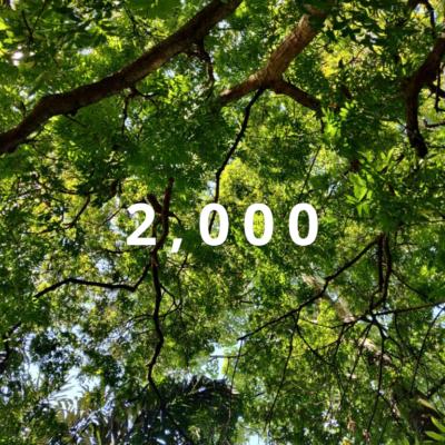 Merbau Trees Bukit Persketuan